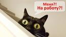 8 способов заработать на коте и кошке в 2019 🐱 – Смешные кошки МатрсокинТВ