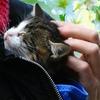 КОШКИН ДОМ 39 | приют | помощь бездомным кошкам