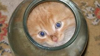 Котенок не мог вылезти из банки. Посмотри, что сделала мама-кошка... это надо видеть