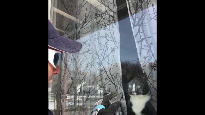 Работница почтового отделения засняла кота который отчаянно защищает свой дом