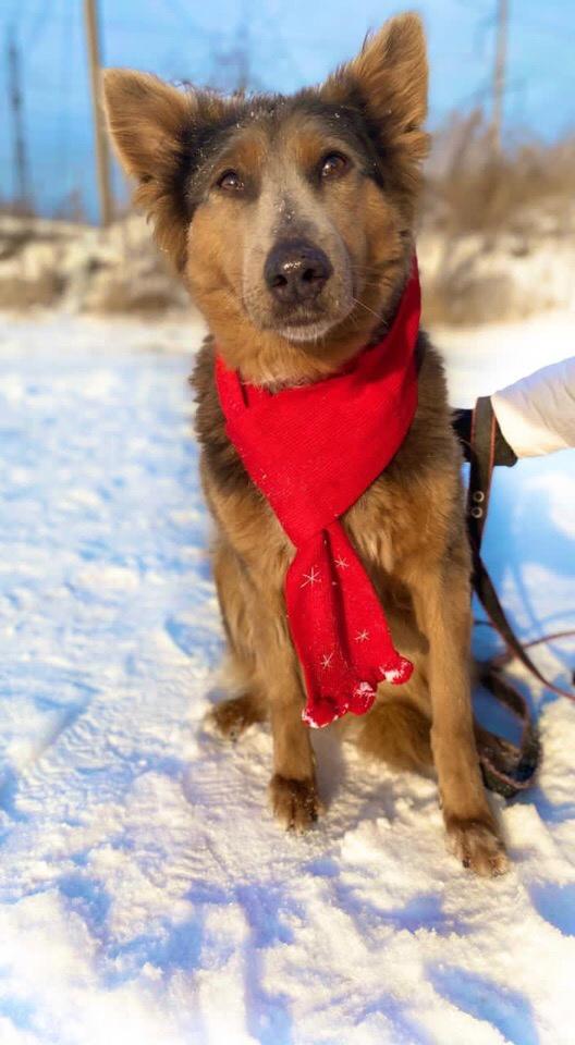 Мы влюблены в собак!♥♥♥  Мы любим, когда
