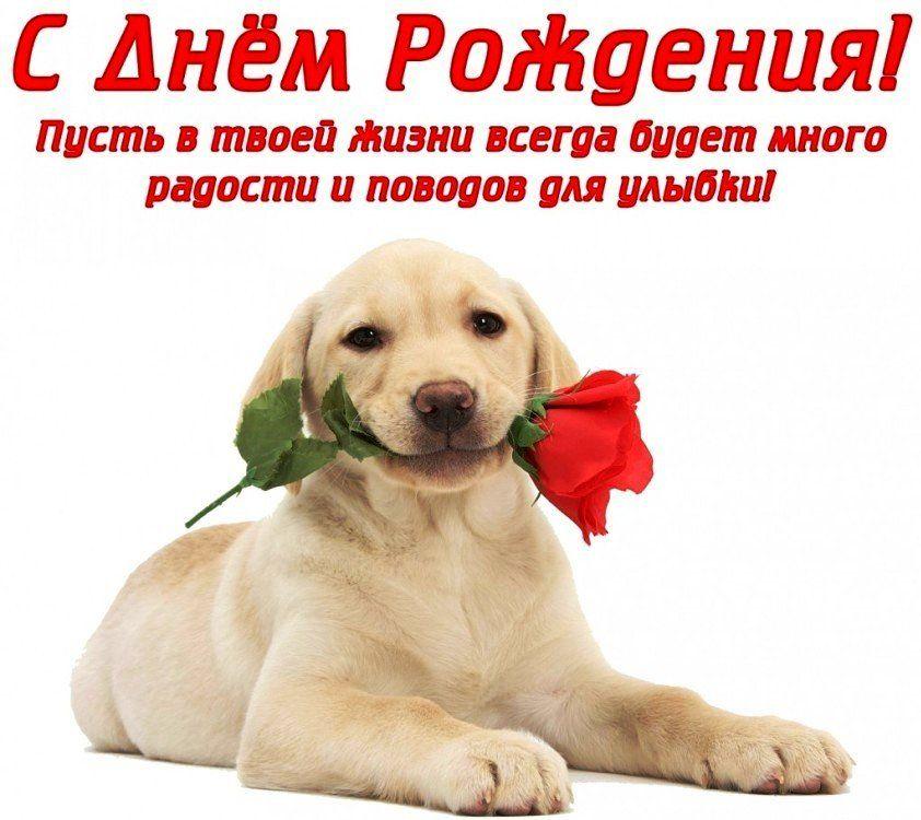 Сегодня поздравляем с Днем Рождения: Анастасия Воеводина ([id86904378|@id86904378]),