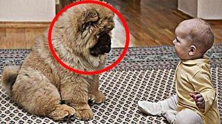 Малышка была парализована! Врач посоветовал семье купить собаку. Все были удивлены её действиям
