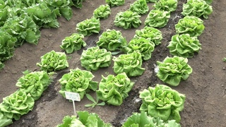 Фермерский агросоюз «За Родину» - успешно развивающееся предприятие.