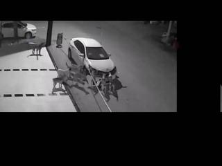 Бродячие собаки разобрали машину на запчасти
