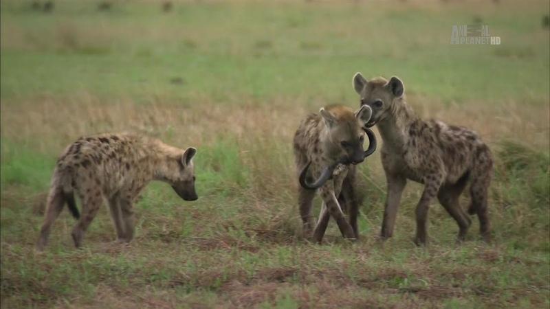 В дебрях Африки Замбези Река жизни Документальный фильм Animal Africa E04 Zambezi
